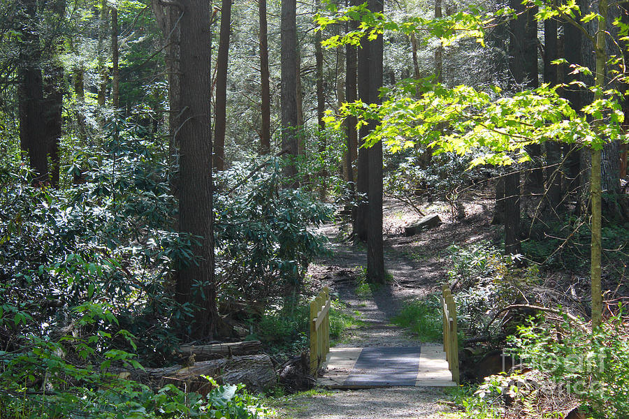 old-growth-trail-cathedral-state-park-wv-howard-tenke